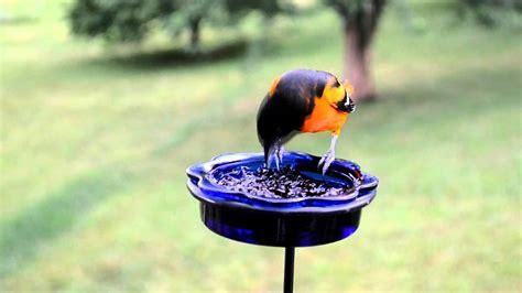 Oriole Feeder Grape Jelly by Bird House Bluebirds Orioles Mealworms