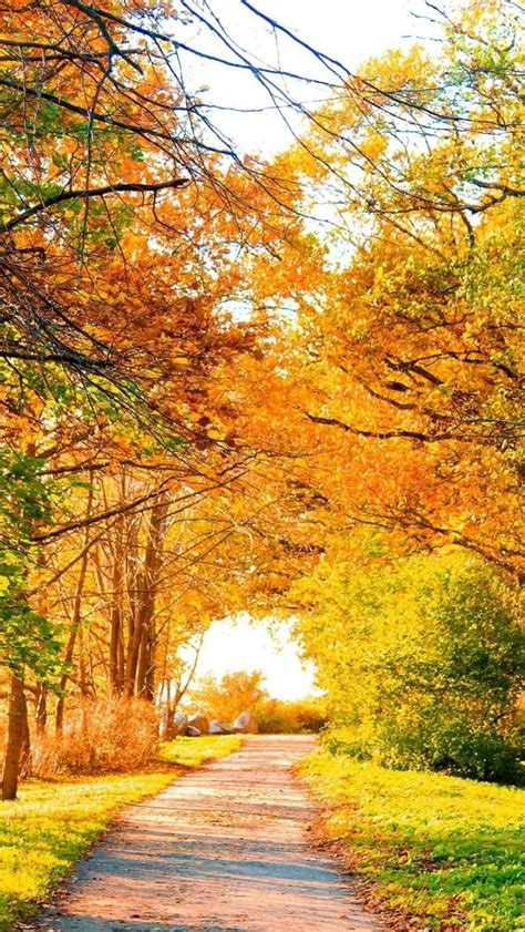 Beautiful Autumn Wallpapers Iphone by 640x1136 Beautiful Autumn Trees Path Iphone 5 Wallpaper