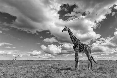Kaziras Kyriakos Dream African Photographie Photographe Animalier