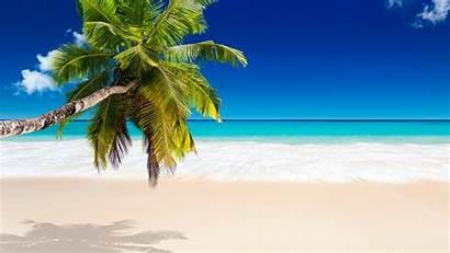 Tropical Beach Wallpapers Desktop Background Paradise Palm