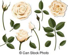 Parts Flower Vector Illustration Diagram