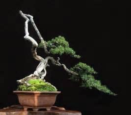 bonsai design 25 awesome looking bonsai designs