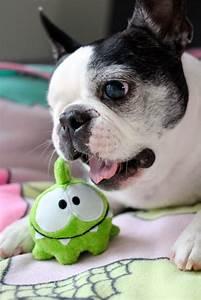 53 best Pepper + Teddy = SMILE images on Pinterest ...