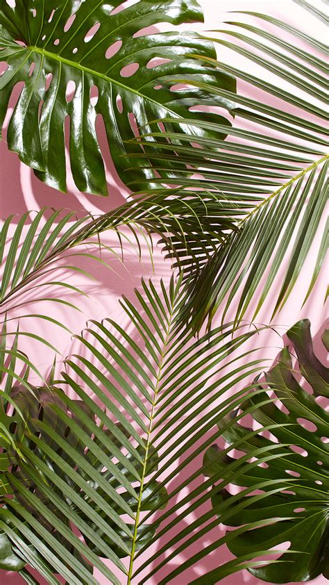 Palm Background Tropical Palm Leaf Wallpaper 24 Images