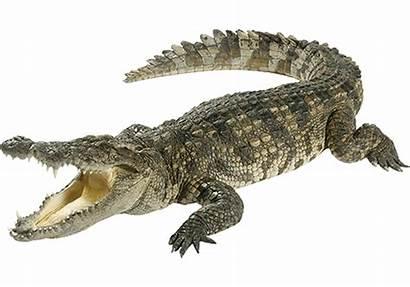 Animals Dinosaurs Crocodile Were Ancient Which Around