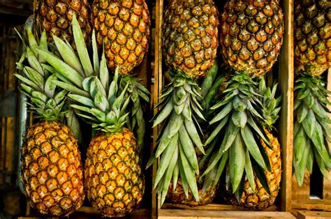 small bathroom decoration ideas a brief history of the pineapple