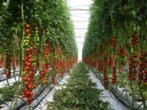Emerald Eco-City - Grow Our Own Food – World's Largest CSA ... Pantothenic Acid