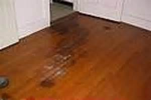 what is the best laminate wood flooring for dogs greencheese org