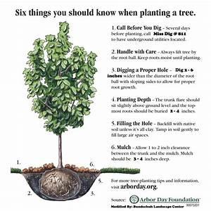 Tree Planting  U2013 Bundschuh Landscape Center