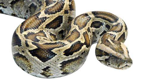 7 kitchen island 23 python swallows kmtr
