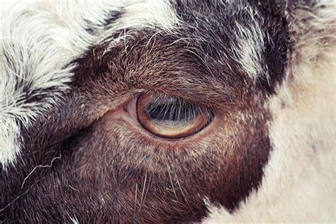 Animali In Gabbia - gli occhi degli animali in gabbia di oscar ciutat