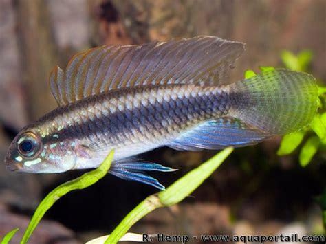 quel poisson choisir pour un petit aquarium