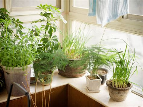 How To Start An Indoor Garden In Even The Smallest New