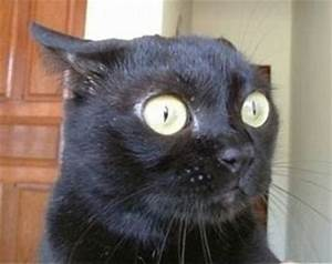 Surprised cat! If I was a cat, I would make this face at ...