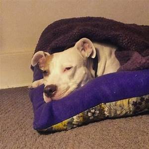 1000 images about the pit stop on pinterest With pit stop dog bed