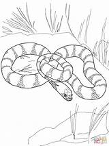 Snake Coloring Pages King California Garter Snakes Printable Drawing Mamba Tiger Water Python Flower Plains Kingsnake Getdrawings Sheets Supercoloring African sketch template