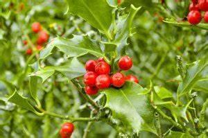 Pflanzen Schattig Winterhart : winterharte topfpflanzen welche pflanzen sind winterhart ~ A.2002-acura-tl-radio.info Haus und Dekorationen