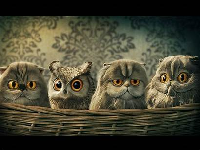 Owl Funny Wallpapers Backgrounds Owls Cat Animal