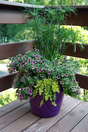 Summer Container Gardening  Winterberry Gardens