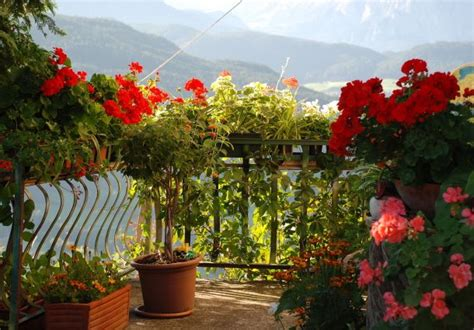 Kübelpflanzen Für Den Schatten by Blumen F 252 R Den Balkon Im Schatten Bl 252 Hen Im Dunkeln