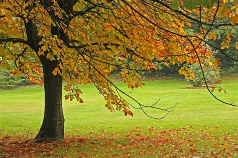 a tree in the fall trees quot r quot us inc november 2013