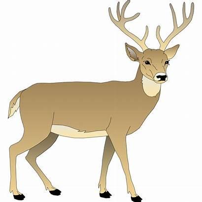Deer Clipart Vector Clip Buck Svg Male