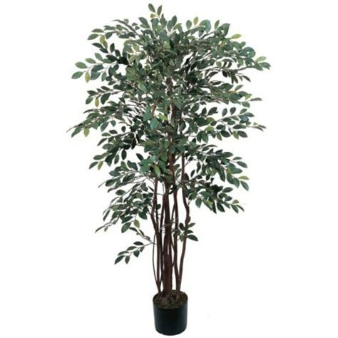 decorative natural  artificial potted  ruscus