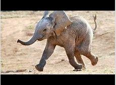 Lustige Tiere Elefanten [Neues HD Video April 2014] YouTube