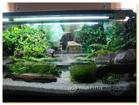 aquarium pour tortue de floride id 233 e d 233 co pour aquarium tortue encombrement place