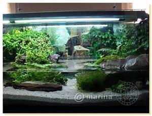 Idee Decoration Aquarium : exemple id e d coration aquarium tortue ~ Melissatoandfro.com Idées de Décoration