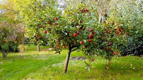 Kleiner Garten Im Herbst by Apfel Pflegehinweise G 228 Rtnertipps Und Weitere