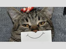 Creative Owner Draws Funny Facial Expressions For His Cat