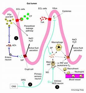 Neural immunoregulation: emerging roles for nerves in ...
