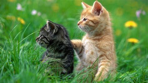 【猫】 ねこ! きれいな壁紙 【1920×1080】  【1920×1080】 猫の壁紙 【フルhdcat