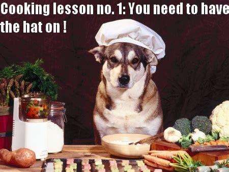 chien cuisiné animaux en cuisine bento