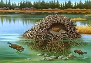 Beaver Lodge Cutaway