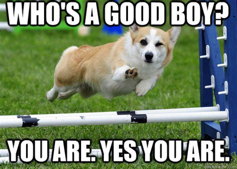 Good Boy Memes - who s a good boy whosagoodboy