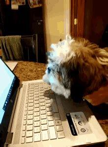 dog typing gifs tenor
