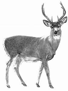 Index of /jefferson_school/marys_peak/animals