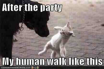 Doggie Memes, Funnies… And A Few Cat Memes, Too Motley