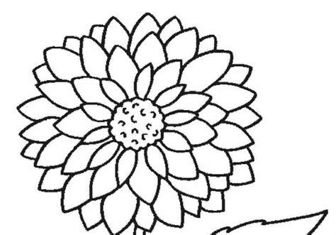 gambar bunga seruni gambarrrrrrr