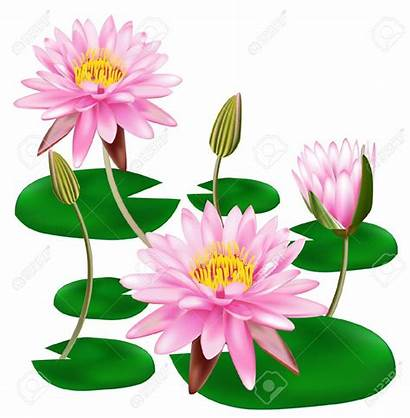 Lotus Flower Clipart Pink Vector Clipground Cliparts
