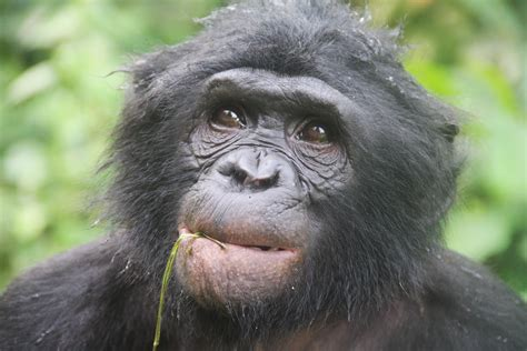bonobo as hot as a vindaloo amateur indian girl masturbating