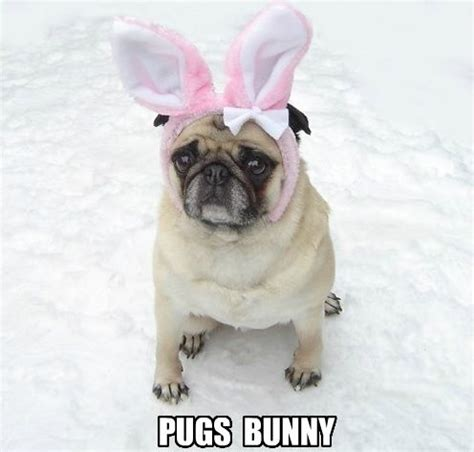 Cute Easter Meme - the 27 cutest easter things to ever happen pug love bunny meme and snow