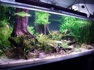 Aquarium Einrichten Beispiele : malawibecken umgestaltung zum gesellschaftsbecken aquarien vorstellung cichlidenwelt forum ~ Frokenaadalensverden.com Haus und Dekorationen