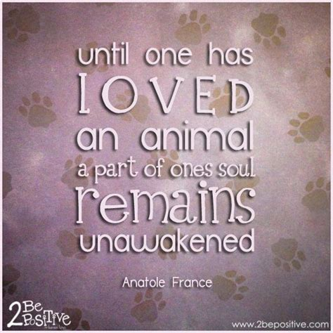 quotes  pets unconditional love quotesgram