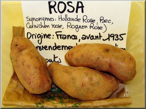 cuisine rognon pomme de terre rosa
