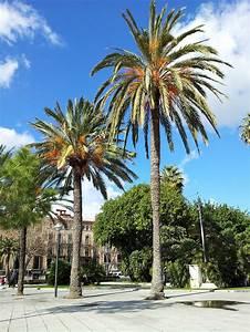 Bilder Von Palmen : palmen vor dem palacio de la almudaina we love mallorca ~ Frokenaadalensverden.com Haus und Dekorationen