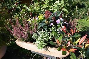 Dauerbepflanzung Für Balkonkästen : herbstzauber attraktive bepflanzung f r k bel und k sten ~ Frokenaadalensverden.com Haus und Dekorationen