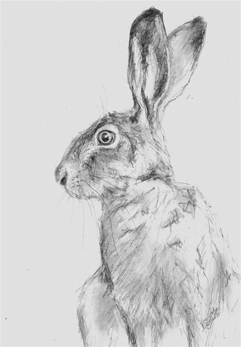 original  pencil wildlife animal drawing   hare